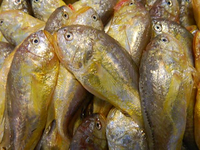 石浦海鲜,石浦菜场,海鲜供应,代办托运(今日价格参考2014,12月5日)